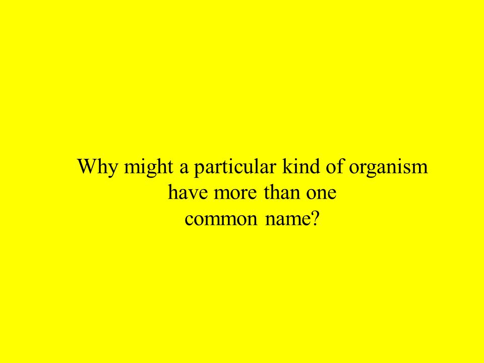 Why might a particular kind of organism have more than one common name