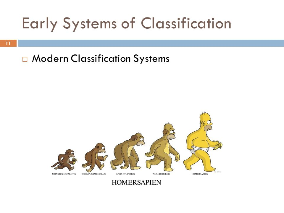Early Systems of Classification  Modern Classification Systems 11
