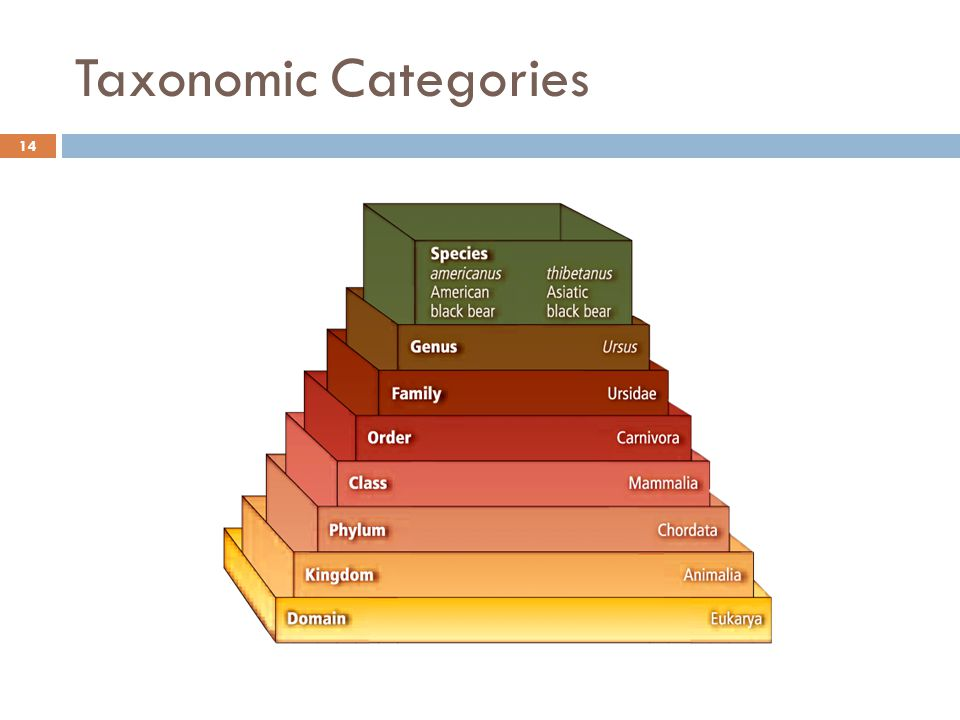 Taxonomic Categories 14