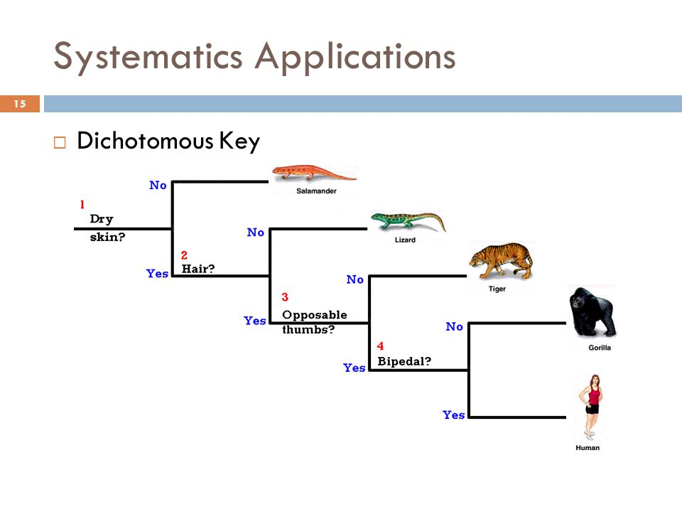 Systematics Applications  Dichotomous Key 15