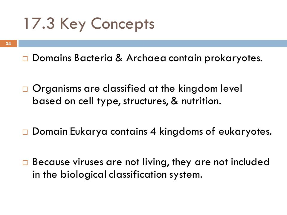17.3 Key Concepts  Domains Bacteria & Archaea contain prokaryotes.