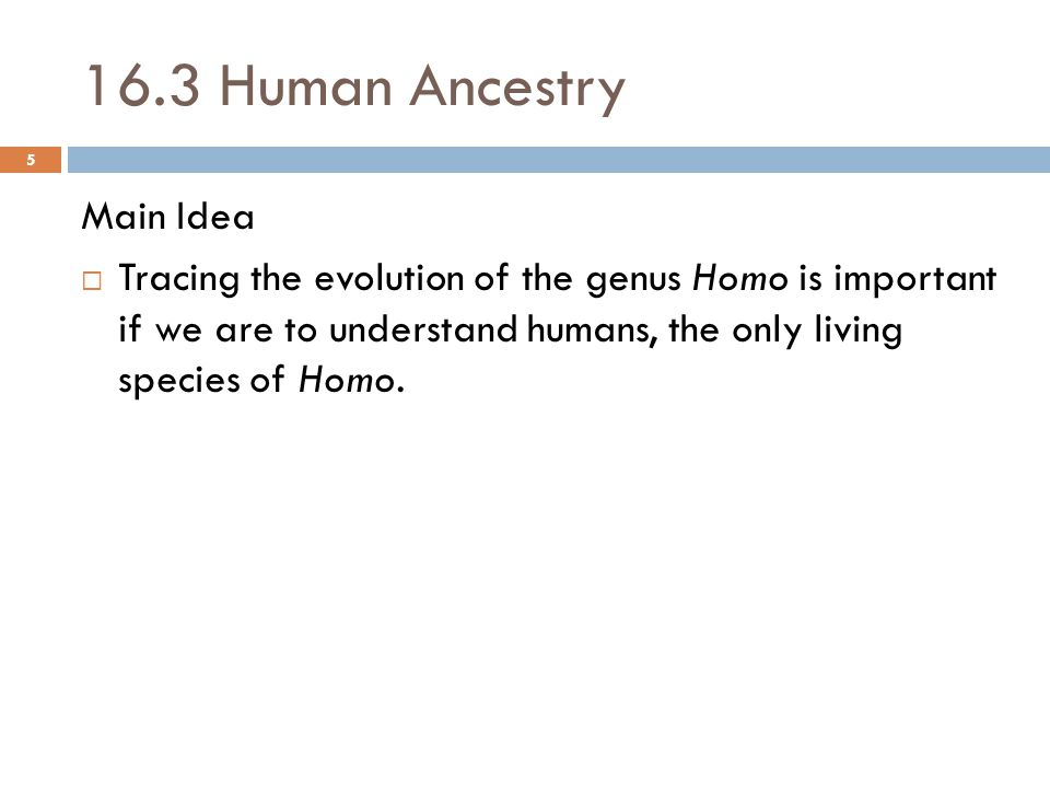 16.3 Human Ancestry Main Idea  Tracing the evolution of the genus Homo is important if we are to understand humans, the only living species of Homo.