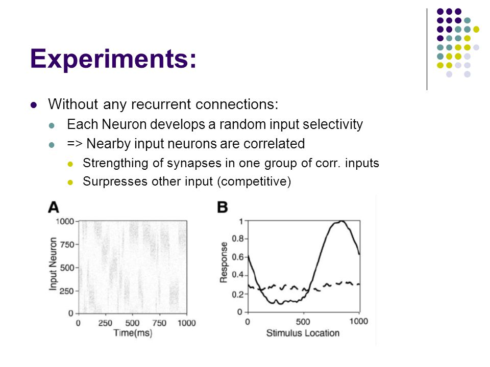 Experiments: Without any recurrent connections: Each Neuron develops a random input selectivity => Nearby input neurons are correlated Strengthing of synapses in one group of corr.