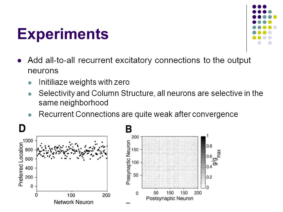 Experiments Add all-to-all recurrent excitatory connections to the output neurons Initiliaze weights with zero Selectivity and Column Structure, all neurons are selective in the same neighborhood Recurrent Connections are quite weak after convergence