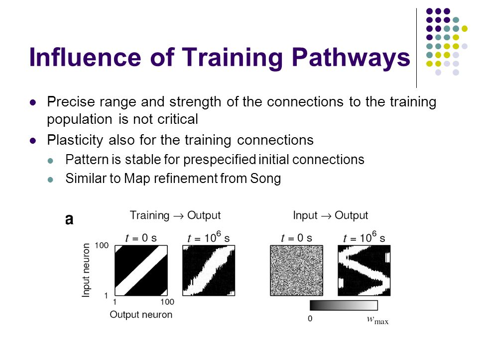 Influence of Training Pathways Precise range and strength of the connections to the training population is not critical Plasticity also for the training connections Pattern is stable for prespecified initial connections Similar to Map refinement from Song