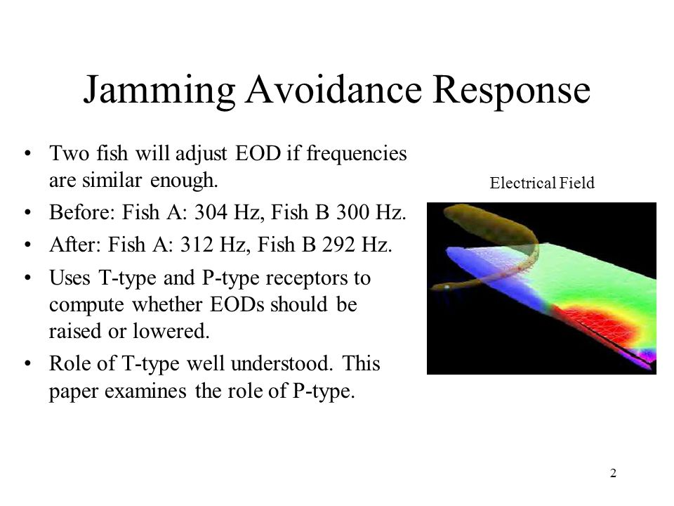 2 Jamming Avoidance Response Two fish will adjust EOD if frequencies are similar enough.
