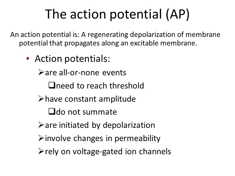 The action potential (AP) An action potential is: A regenerating depolarization of membrane potential that propagates along an excitable membrane.