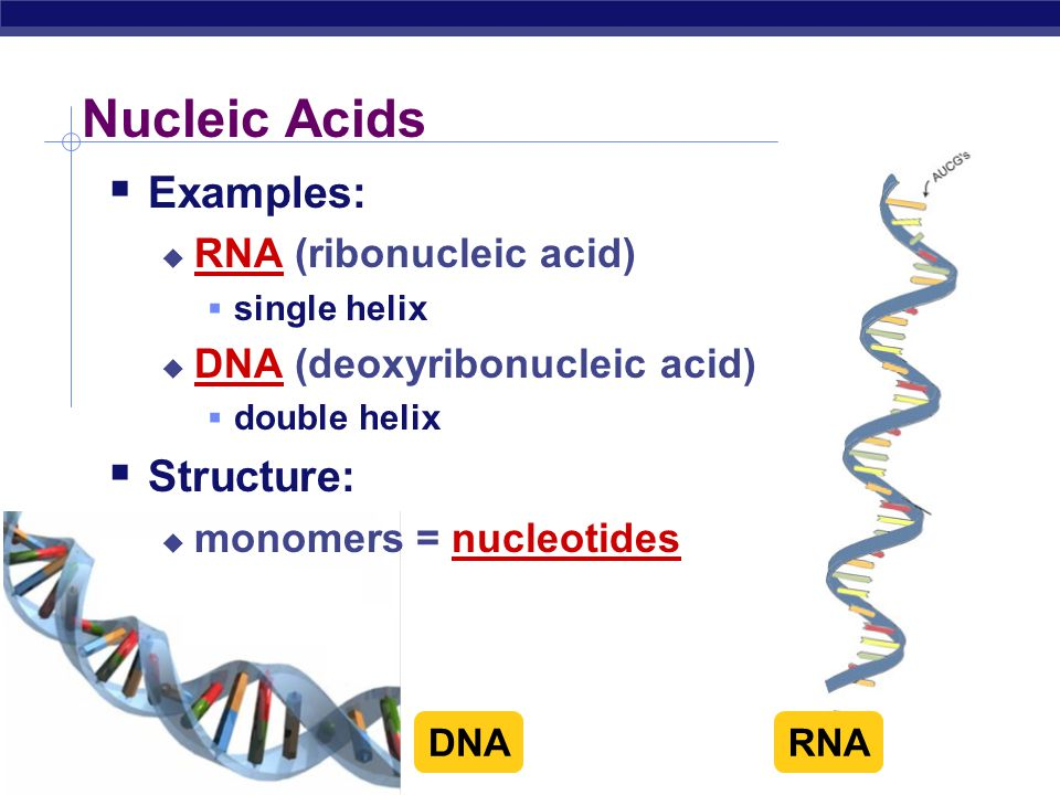 Two examples of nucleic acids.