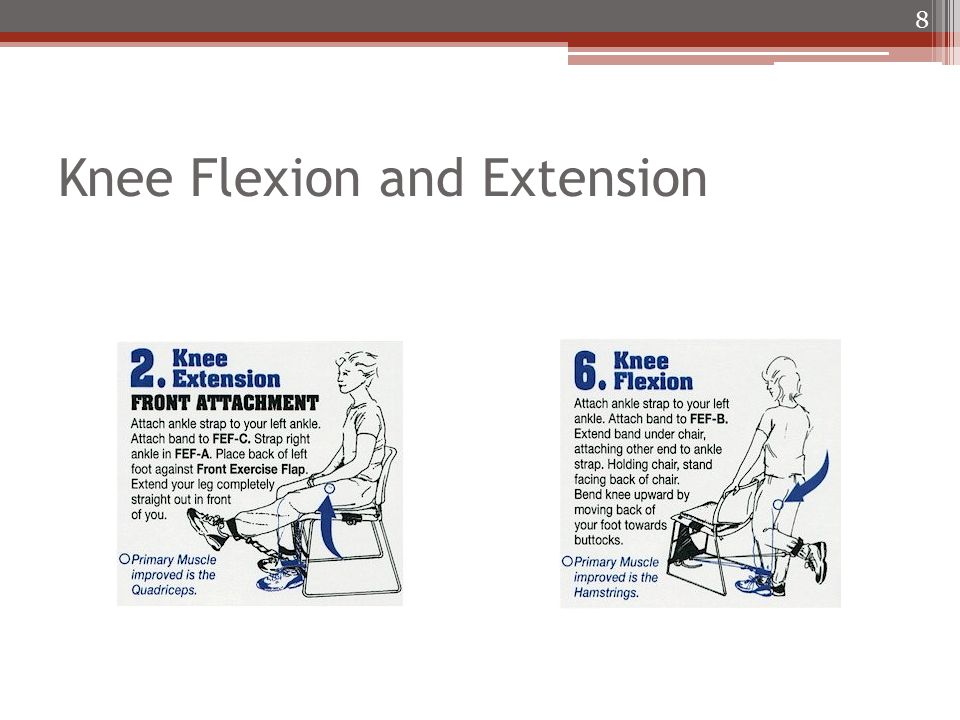 Knee Flexion and Extension 8