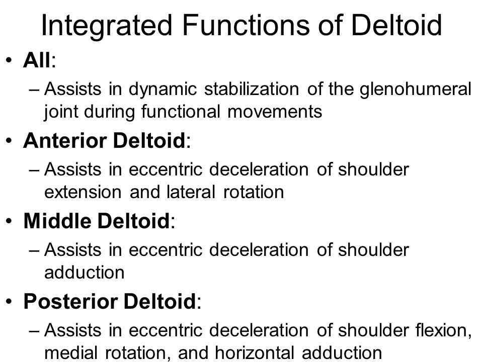 Deltoid This Muscle Has A Triangular Shape Like The Greek Letter