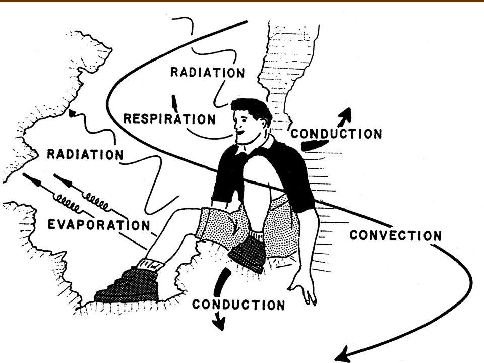 Regulating The Internal Environment Homeostasis Body Temperature