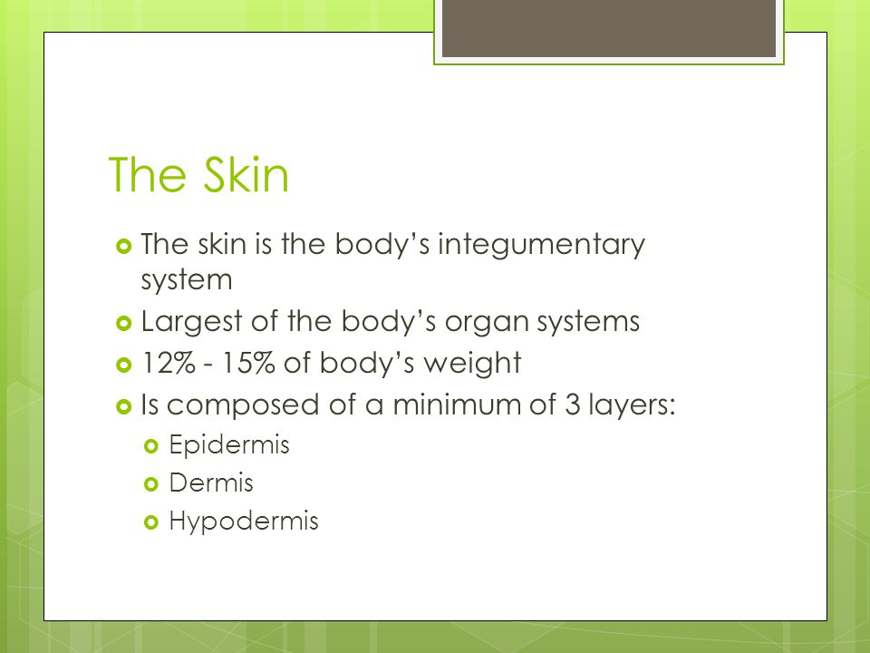 The Skin  The skin is the body's integumentary system  Largest of the body's organ systems  12% - 15% of body's weight  Is composed of a minimum of 3 layers:  Epidermis  Dermis  Hypodermis