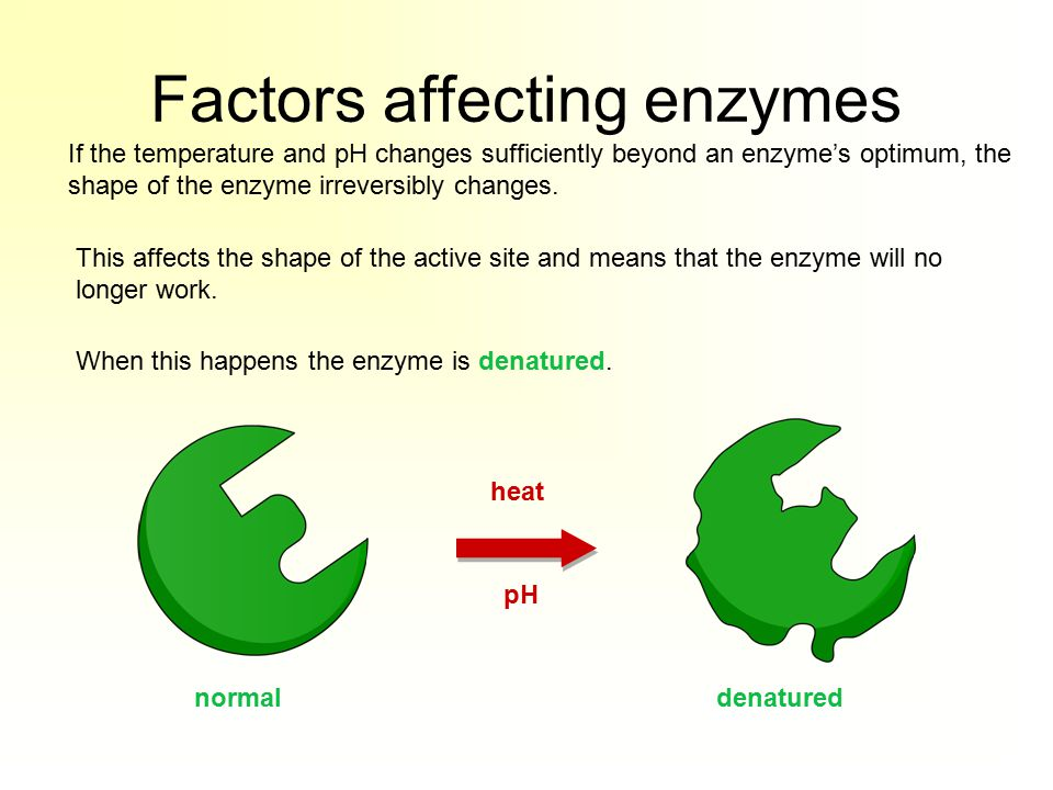 Factors affecting enzymes If the temperature and pH changes sufficiently beyond an enzyme's optimum, the shape of the enzyme irreversibly changes.