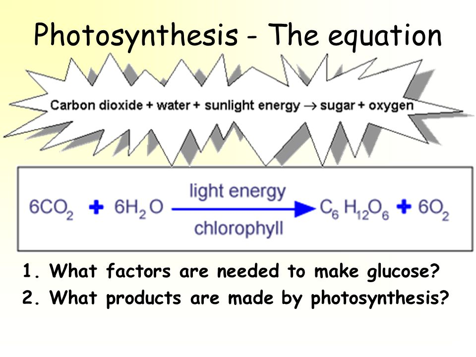 Photosynthesis - The equation 1. What factors are needed to make glucose.