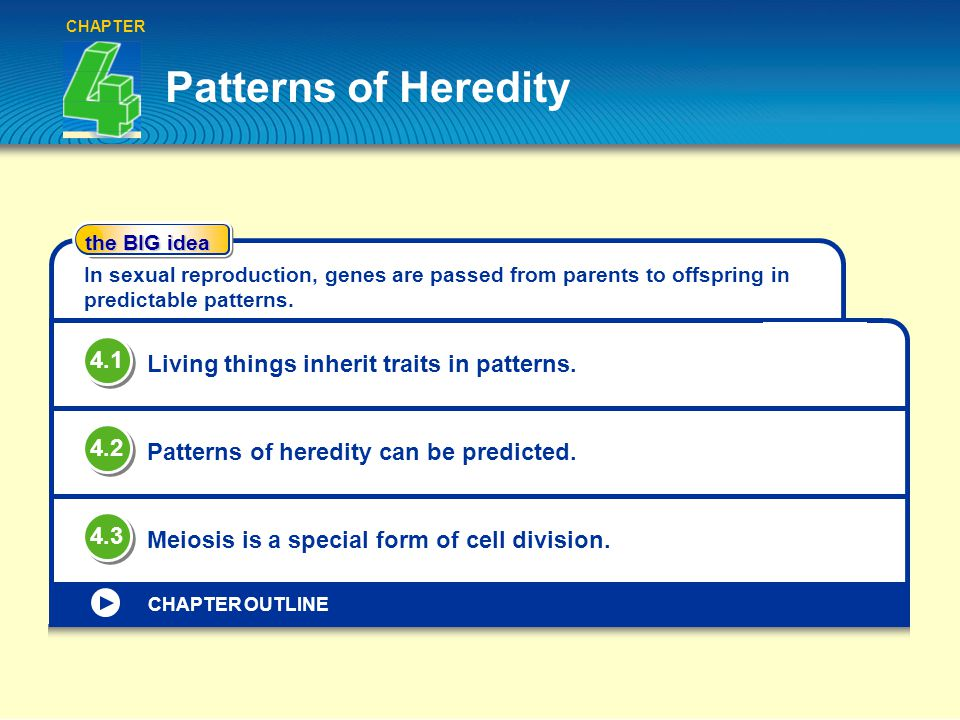 Patterns of heredity chapter the big idea chapter outline in sexual 1 patterns ibookread PDF