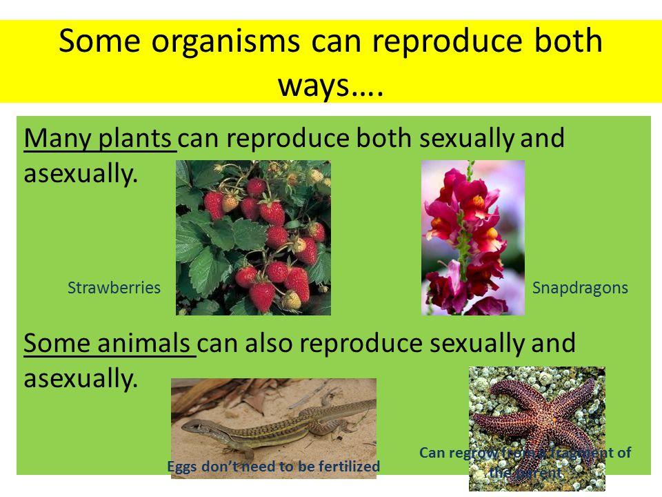 Biological Evolution – genetics standard LS3C –D
