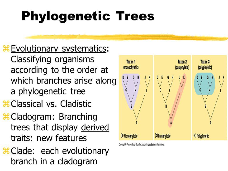 🌷 Phylogenetic tree traits