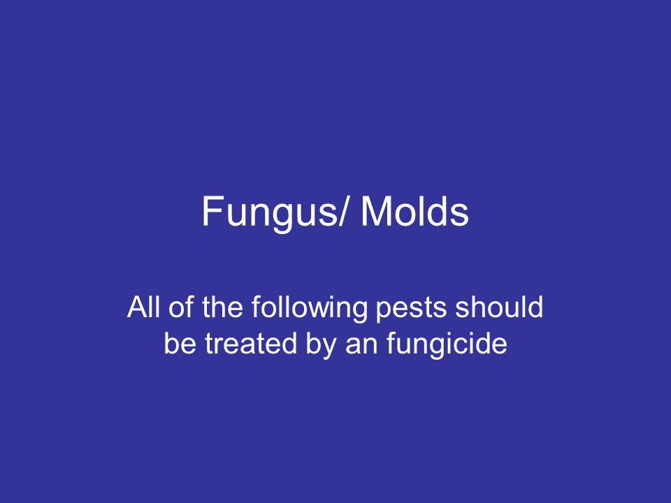 Fungus/ Molds All of the following pests should be treated by an fungicide