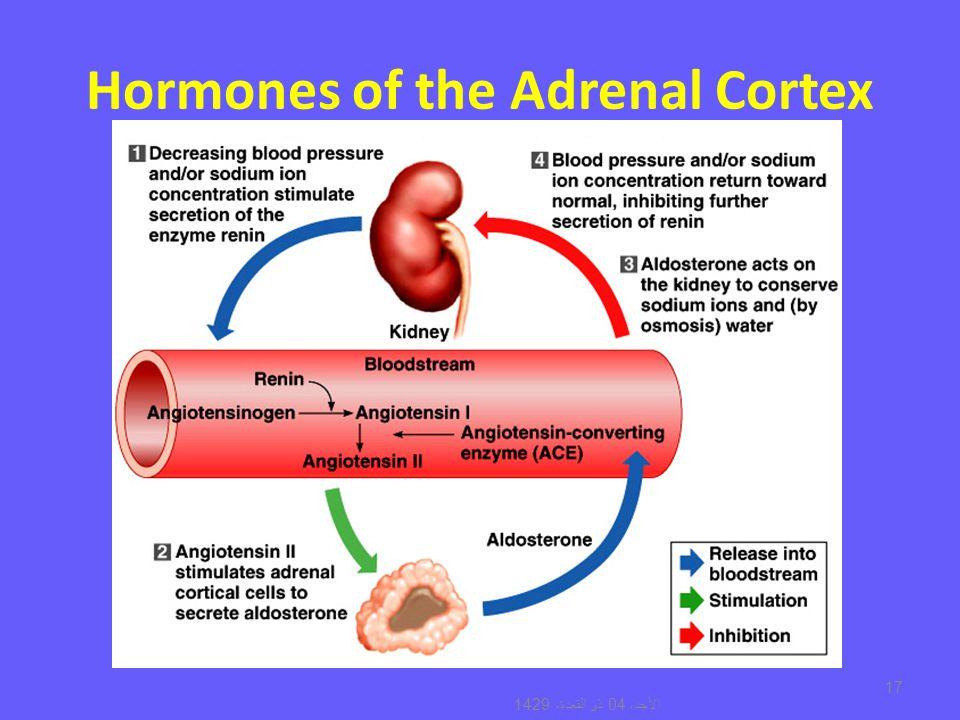 Amazing Adrenal Gland Hormones Ideas Internal Organs Diagram
