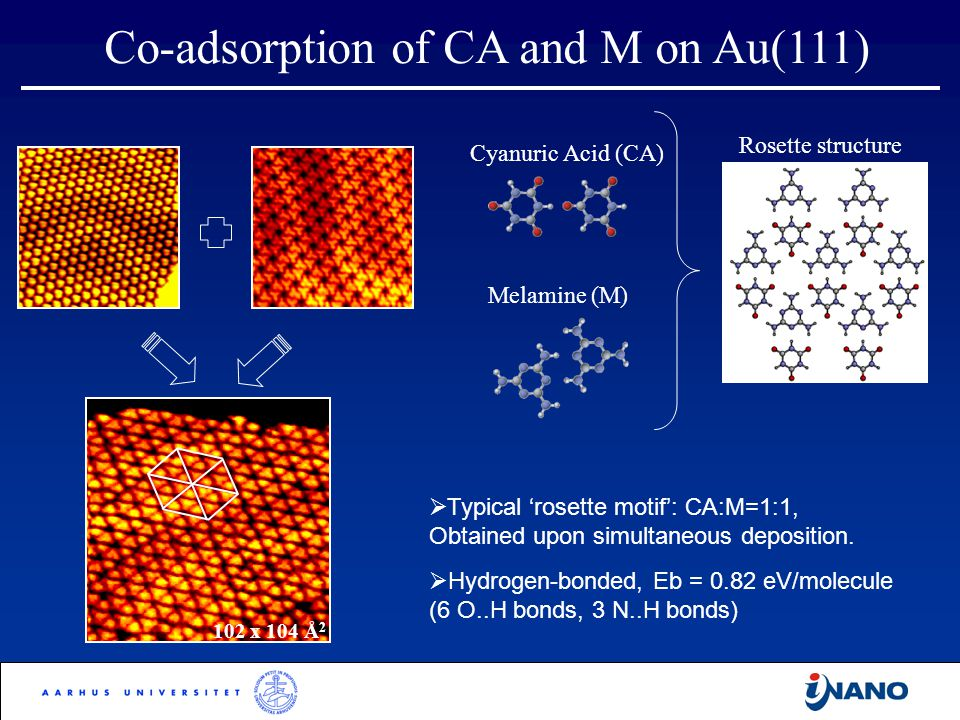 Co-adsorption of CA and M on Au(111) 102 x 104 Å 2  Typical 'rosette motif': CA:M=1:1, Obtained upon simultaneous deposition.