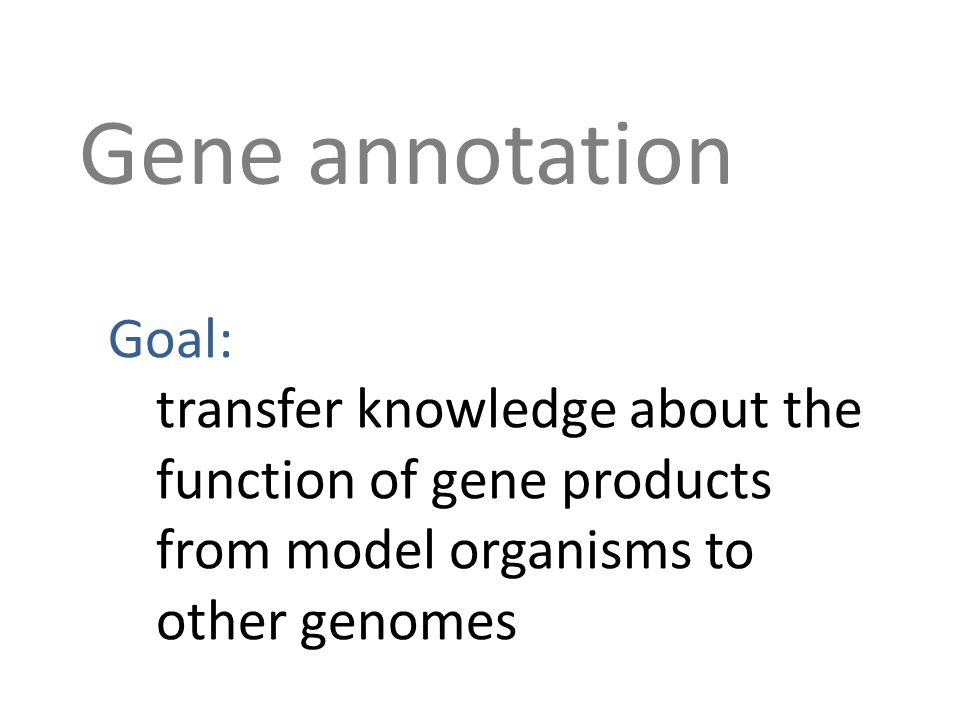 Gene annotation Goal: transfer knowledge about the function of gene products from model organisms to other genomes