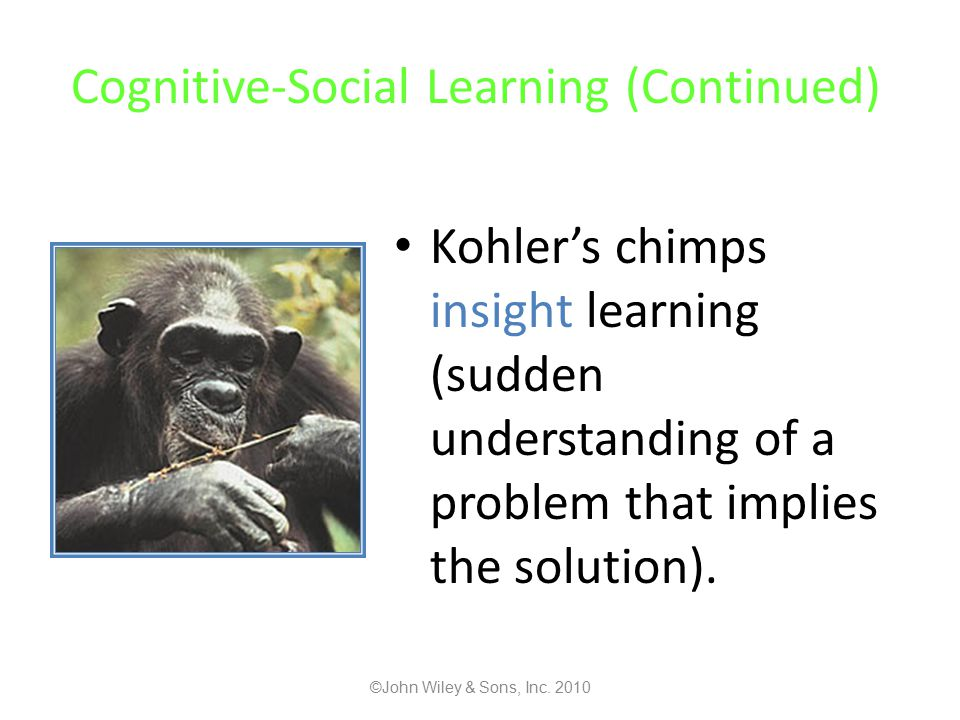Cognitive-Social Learning (Continued) Kohler's chimps insight learning (sudden understanding of a problem that implies the solution).