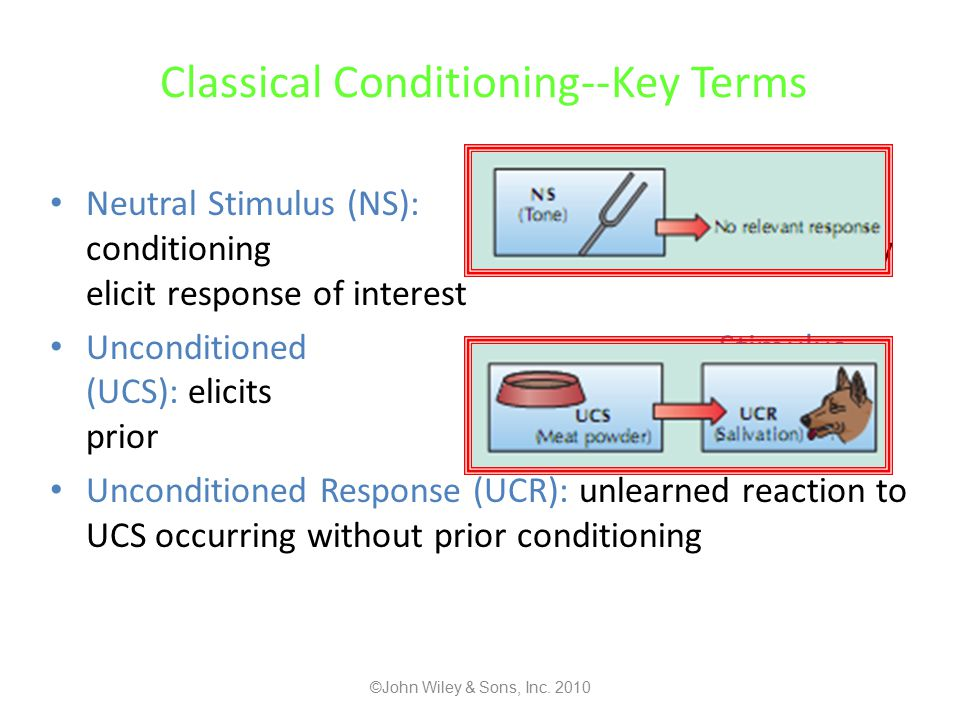 Classical Conditioning--Key Terms Neutral Stimulus (NS): before conditioning doesn't naturally elicit response of interest Unconditioned Stimulus (UCS): elicits UCR without prior conditioning Unconditioned Response (UCR): unlearned reaction to UCS occurring without prior conditioning ©John Wiley & Sons, Inc.