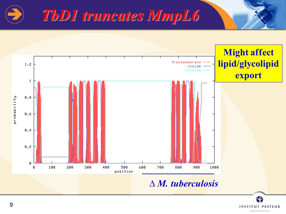 9 TbD1 truncates MmpL6 ∆ M. tuberculosis Might affect lipid/glycolipid export