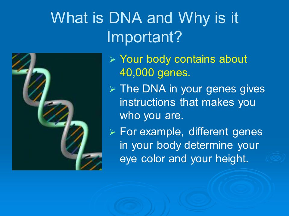 What is DNA and Why is it Important.   Your body contains about 40,000 genes.