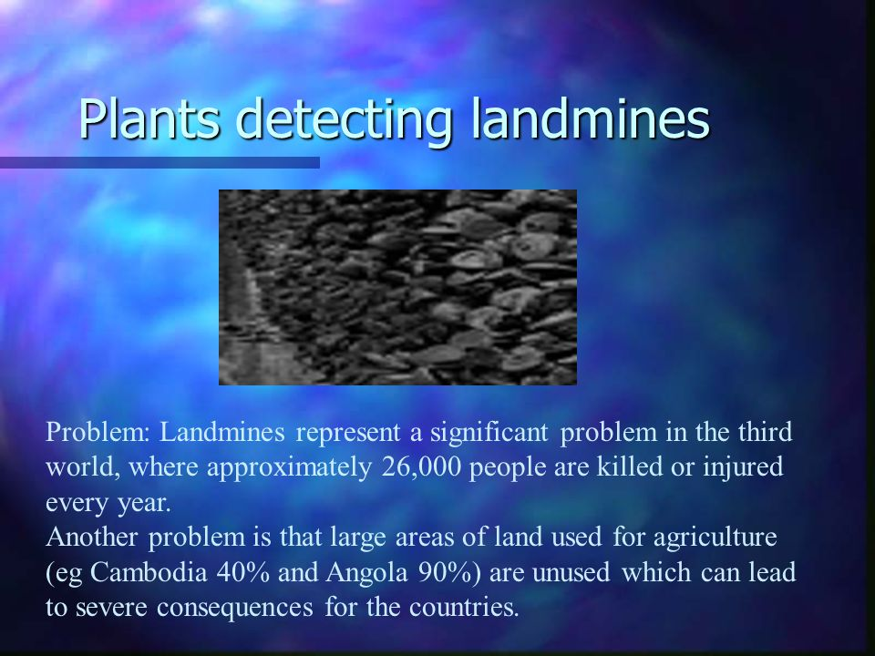 Plants detecting landmines Problem: Landmines represent a significant problem in the third world, where approximately 26,000 people are killed or injured every year.