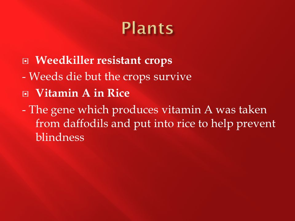  Weedkiller resistant crops - Weeds die but the crops survive  Vitamin A in Rice - The gene which produces vitamin A was taken from daffodils and put into rice to help prevent blindness