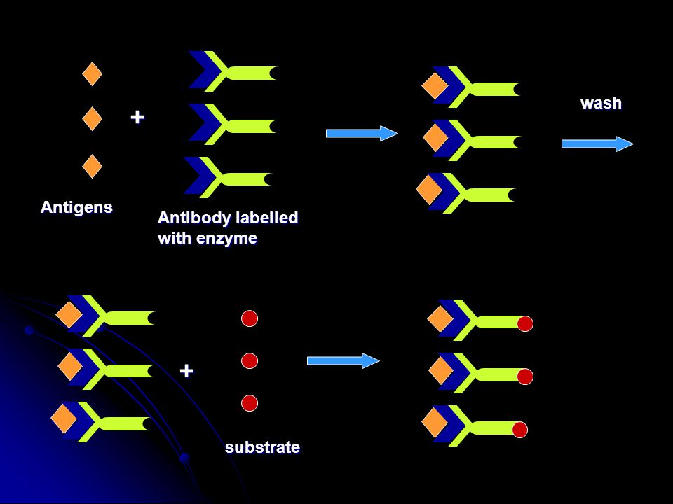 Antigens + Antibody labelled with enzyme wash + substrate