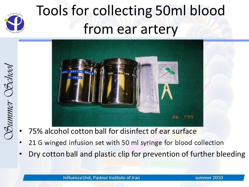 Tools for collecting 50ml blood from ear artery Summer School Influenza Unit, Pasteur Institute of Iran summer % alcohol cotton ball for disinfect of ear surface 21 G winged infusion set with 50 ml syringe for blood collection Dry cotton ball and plastic clip for prevention of further bleeding