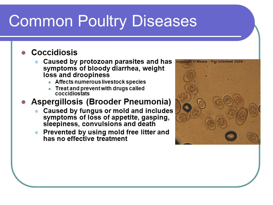 Principles of Animal Diseases Objective 5 02: Discuss the