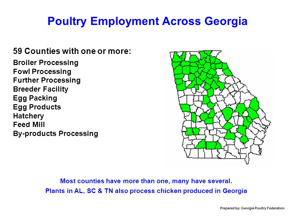 Poultry Employment Across Georgia 59 Counties with one or more: Broiler Processing Fowl Processing Further Processing Breeder Facility Egg Packing Egg Products Hatchery Feed Mill By-products Processing Most counties have more than one, many have several.