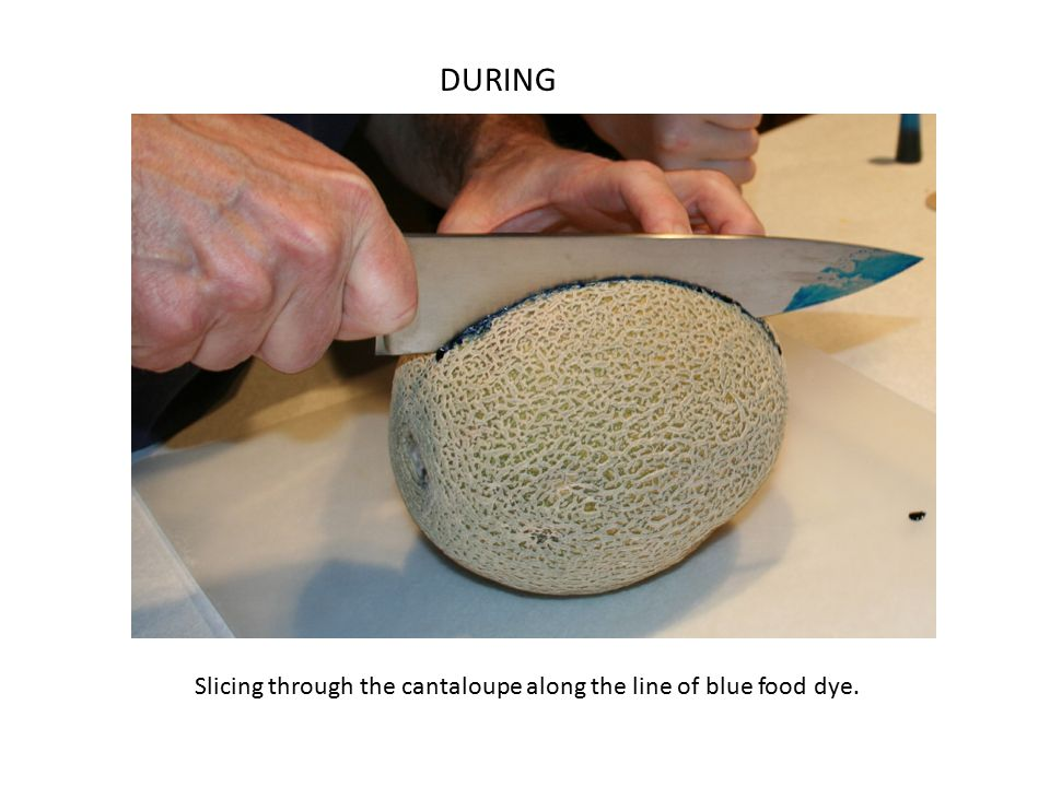 Slicing through the cantaloupe along the line of blue food dye. DURING