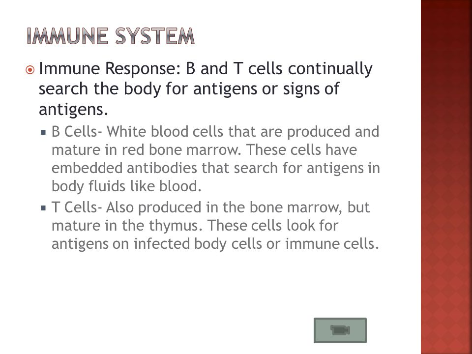  Immune Response: B and T cells continually search the body for antigens or signs of antigens.