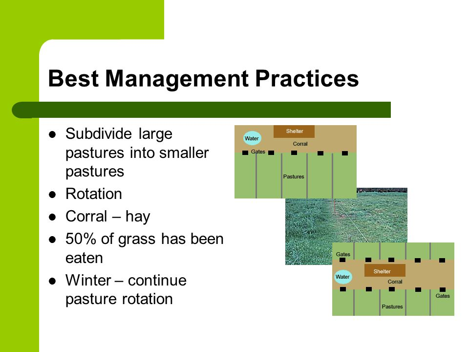 Best Management Practices Subdivide large pastures into smaller pastures Rotation Corral – hay 50% of grass has been eaten Winter – continue pasture rotation