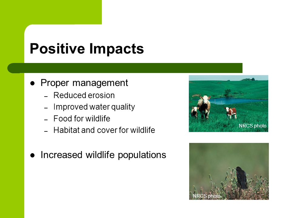 Positive Impacts Proper management – Reduced erosion – Improved water quality – Food for wildlife – Habitat and cover for wildlife Increased wildlife populations NRCS photo