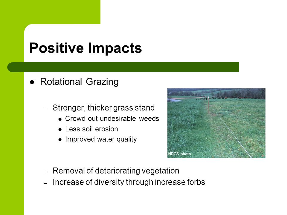 Positive Impacts Rotational Grazing – Stronger, thicker grass stand Crowd out undesirable weeds Less soil erosion Improved water quality – Removal of deteriorating vegetation – Increase of diversity through increase forbs NRCS photo