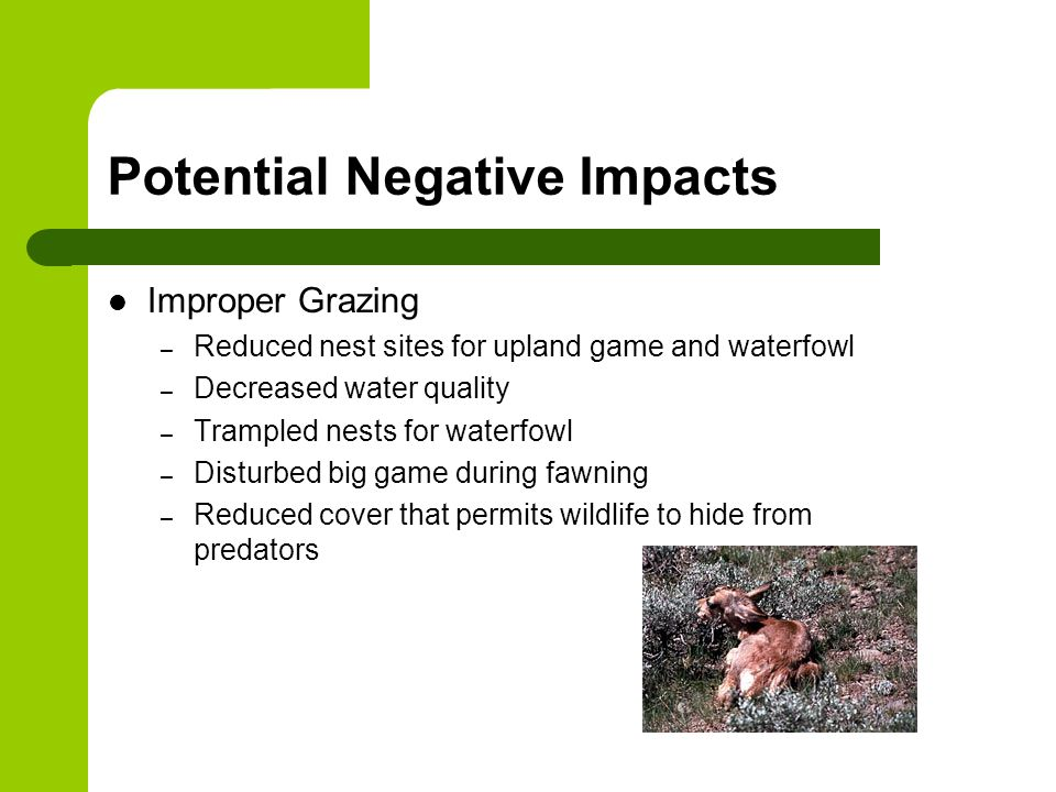 Potential Negative Impacts Improper Grazing – Reduced nest sites for upland game and waterfowl – Decreased water quality – Trampled nests for waterfowl – Disturbed big game during fawning – Reduced cover that permits wildlife to hide from predators