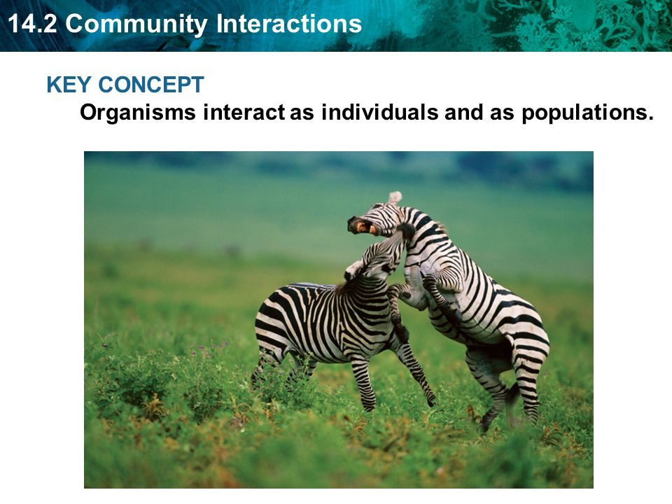14 2 Community Interactions Objectives Students Will Learn That