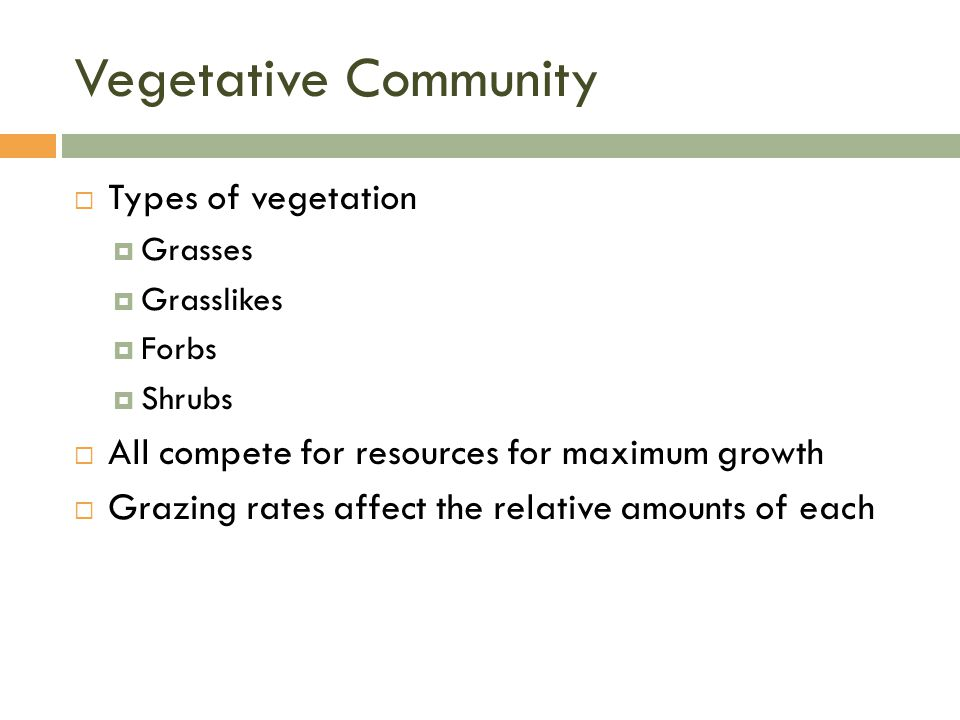 Vegetative Community  Types of vegetation  Grasses  Grasslikes  Forbs  Shrubs  All compete for resources for maximum growth  Grazing rates affect the relative amounts of each