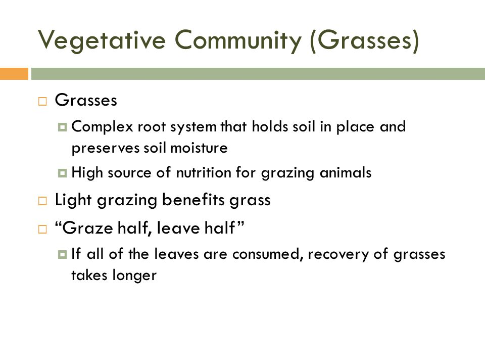 Vegetative Community (Grasses)  Grasses  Complex root system that holds soil in place and preserves soil moisture  High source of nutrition for grazing animals  Light grazing benefits grass  Graze half, leave half  If all of the leaves are consumed, recovery of grasses takes longer