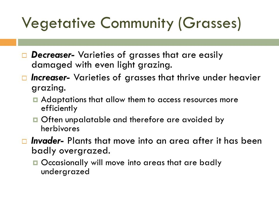  Decreaser- Varieties of grasses that are easily damaged with even light grazing.