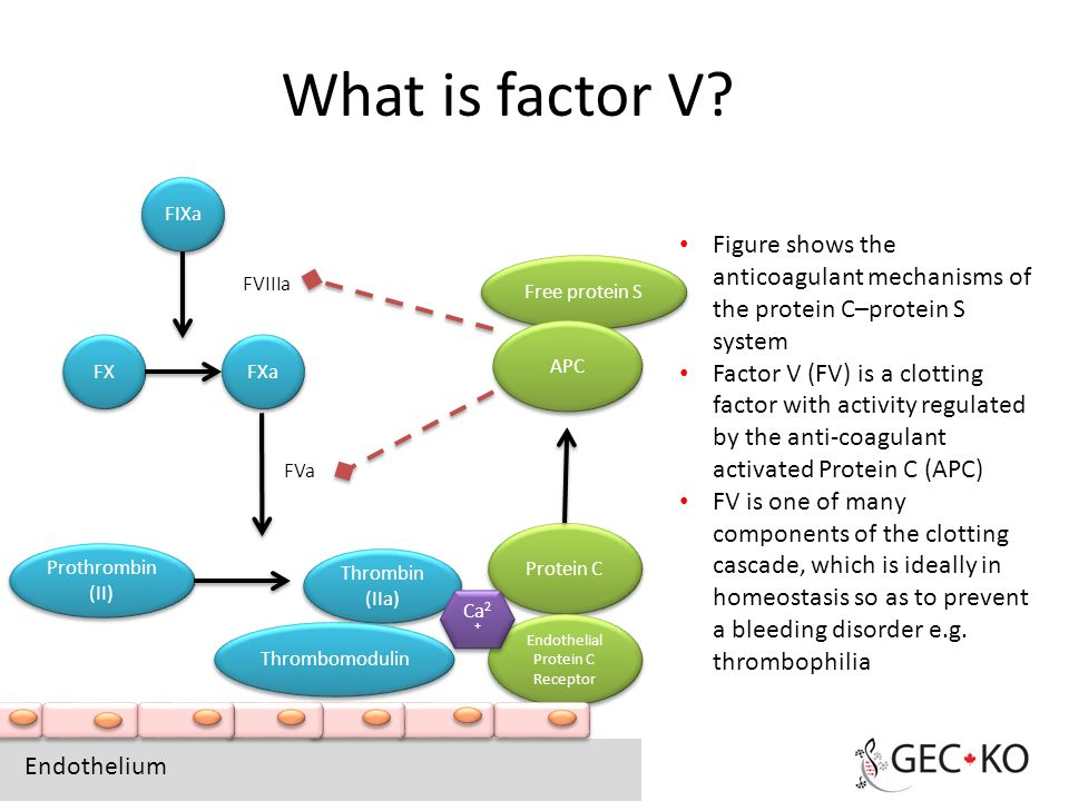 What Is Factor V