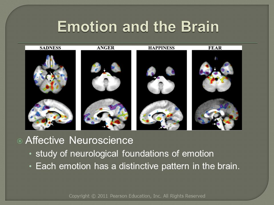  Affective Neuroscience study of neurological foundations of emotion Each emotion has a distinctive pattern in the brain.