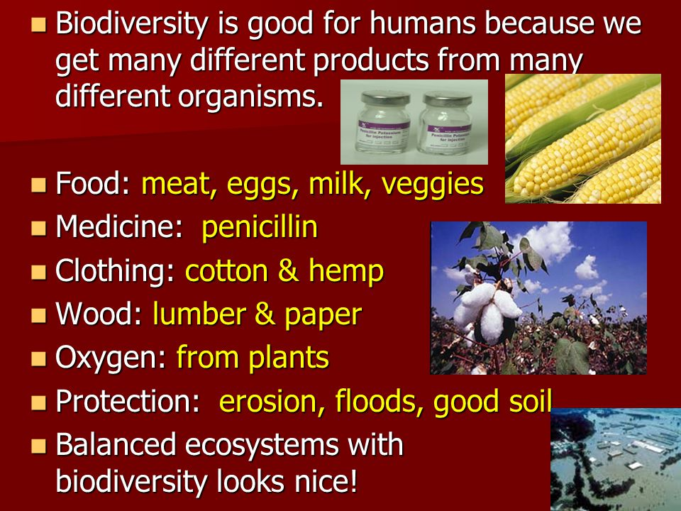Biodiversity is good for humans because we get many different products from many different organisms.