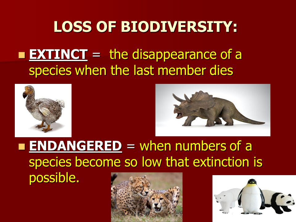 LOSS OF BIODIVERSITY: EXTINCT = the disappearance of a species when the last member dies EXTINCT = the disappearance of a species when the last member dies ENDANGERED = when numbers of a species become so low that extinction is possible.