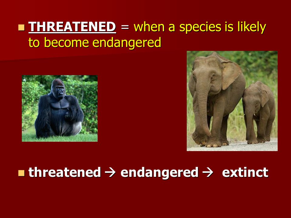 THREATENED = when a species is likely to become endangered THREATENED = when a species is likely to become endangered threatened  endangered  extinct threatened  endangered  extinct